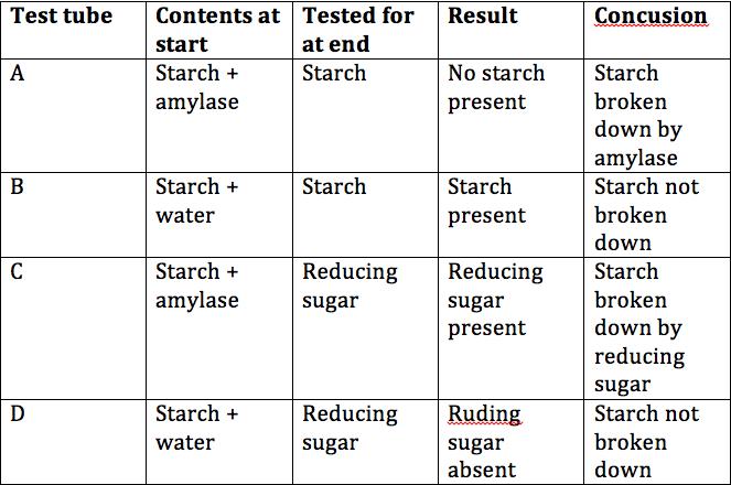amylase breaks down starch into
