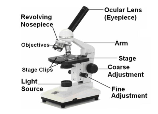 Microscope Diagram To Label Human Body Anatomy