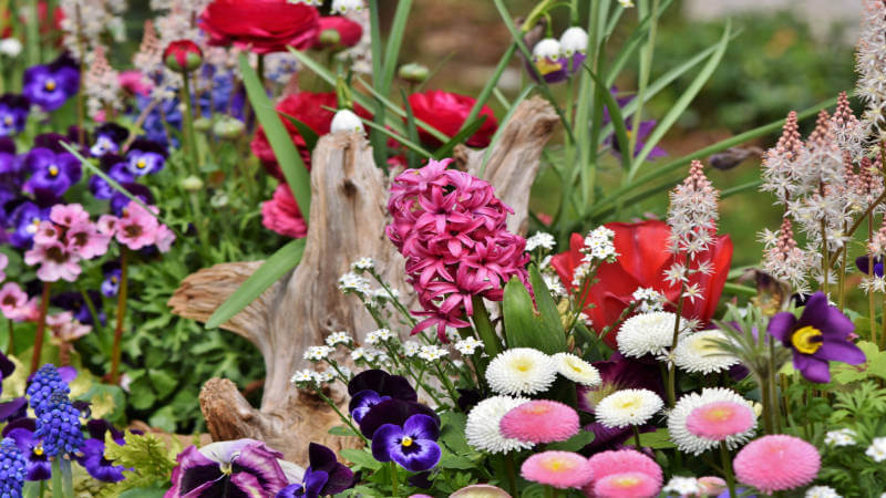 A flower bed including blue, pink and purple spring flowers