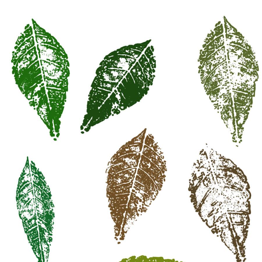 Colourful crayon leaf rubbings