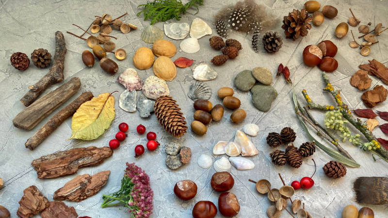 a table of natural remains including shells and seeds