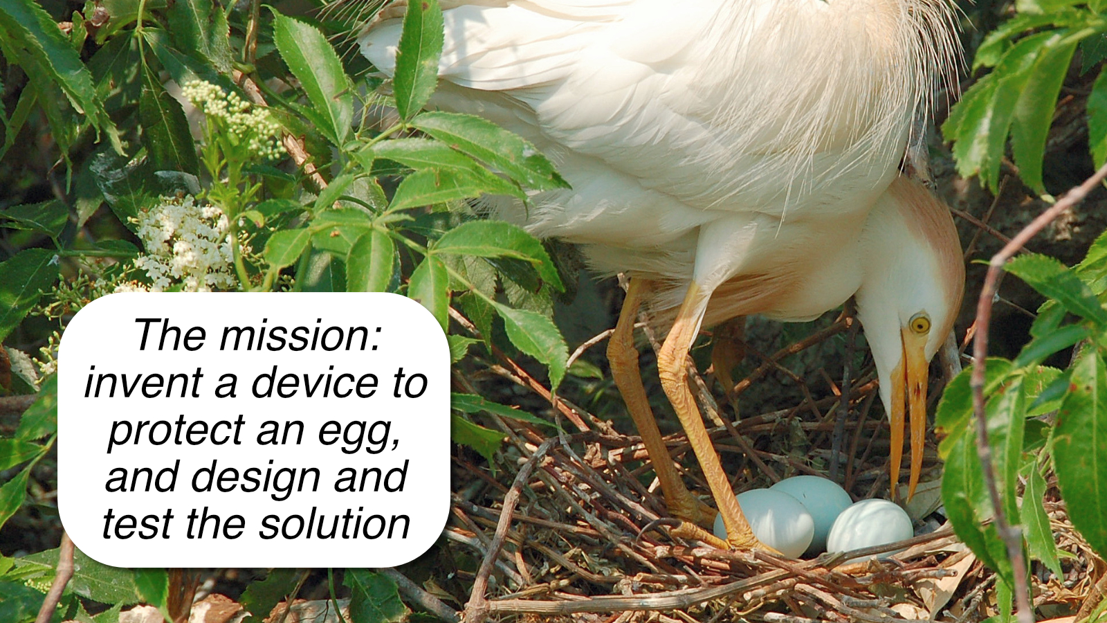 If your class could invent a device to protect an egg, what would it look like?