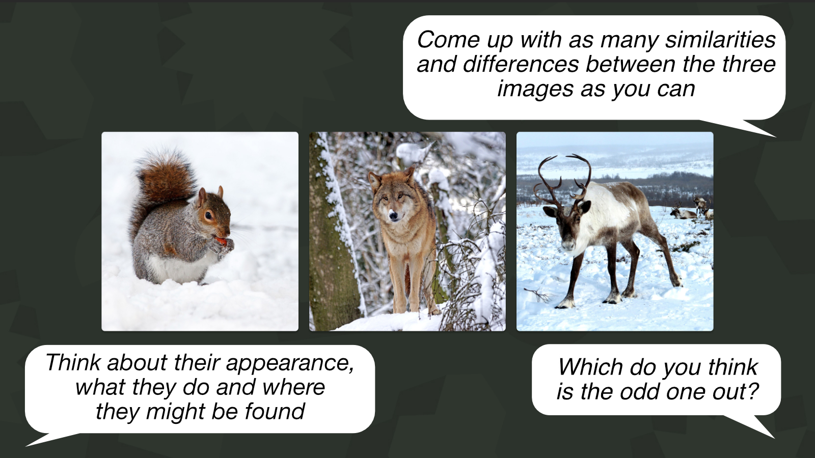 'Animals in winter' is an example of an 'Odd one out' activity