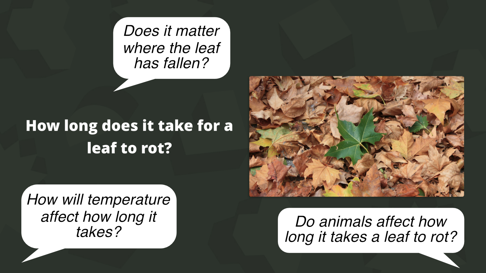 How long does it take for a leaf to rot? Is an example of a The Big Question activity
