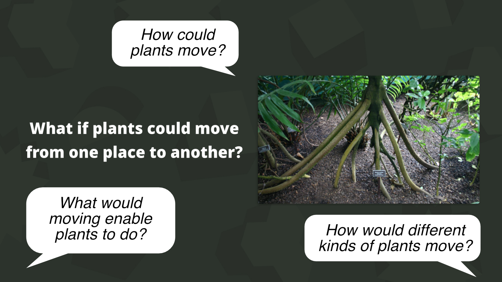 What if plants could move from one place to another? is an example of a 'What if?' activity.