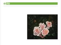 Realistische bloemschilderijen