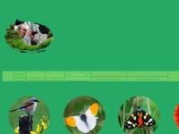 Prachtige foto's van o.a. vogels, vlinders en andere natuurfoto's gemaakt door de broers Jaap en Gertjan Roos