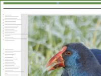 Adri de Groot maakt prachtige foto's van vogels en de natuur, deze foto's stuurt hij via E-mail aan belangstellenden.  Take a look op zijn site. Dank zij hem krijg ik (met zijn toestemming)de kans prachtige vogels en andere dieren te schilderen