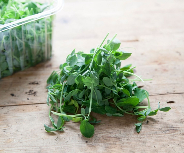 Supermarket scandal free pea shoots by growing underground