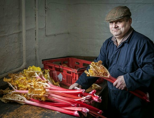 Yorkshire Rhubarb: world famous and made in the dark