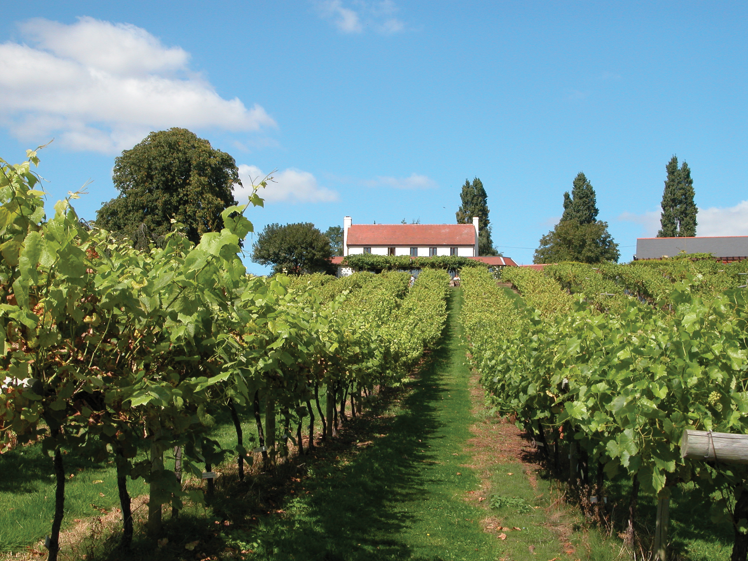 10 of the best vineyards to visit in Britain