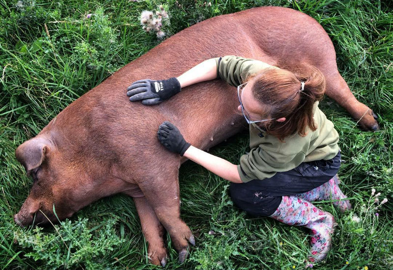 Forest Coal Pit Lauren with boar Prince