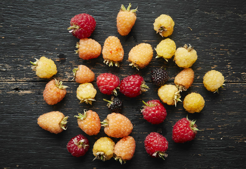 Multi-colour raspberries by Brogdale