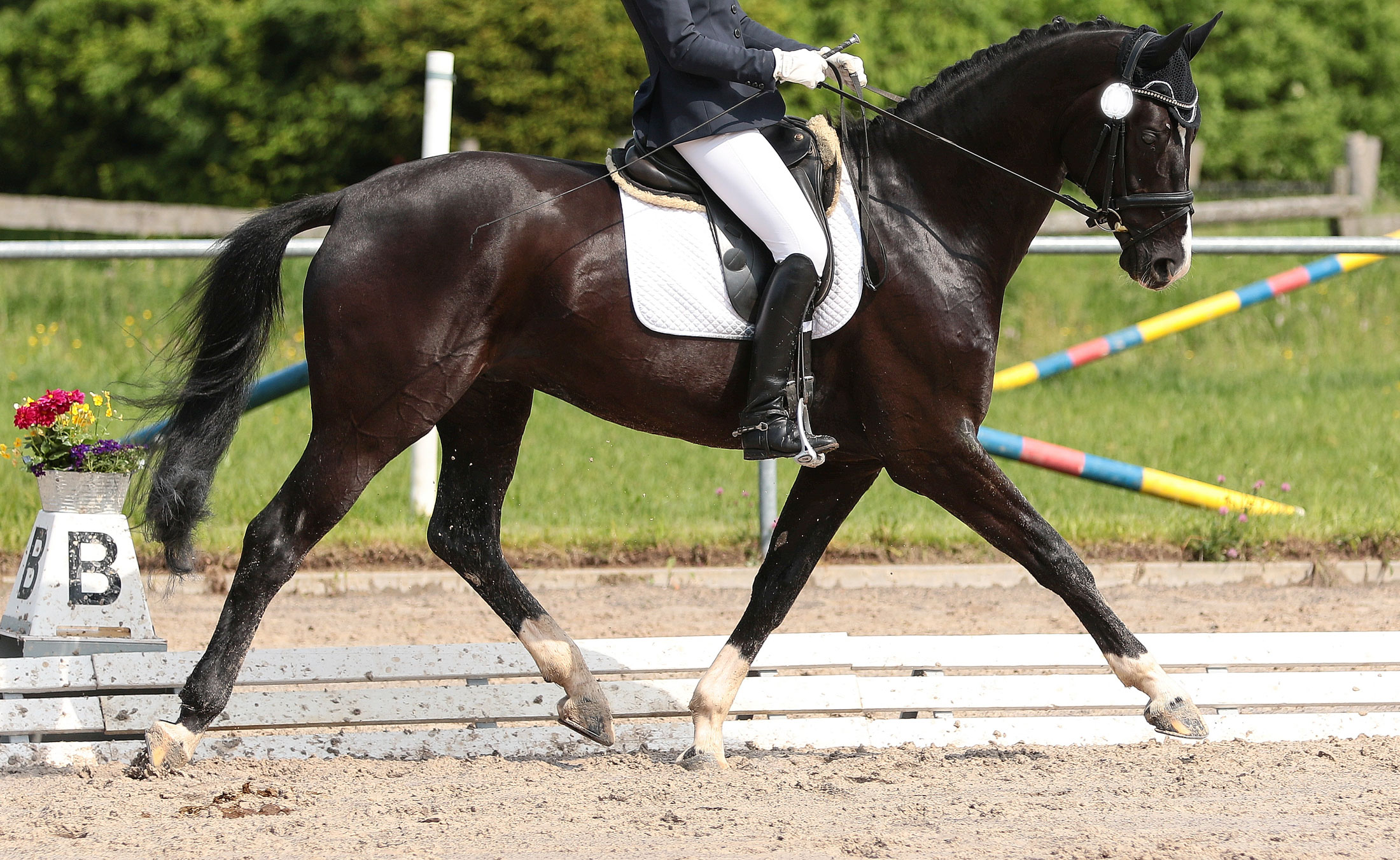 3 Top Tips For Choosing A Dressage Horse