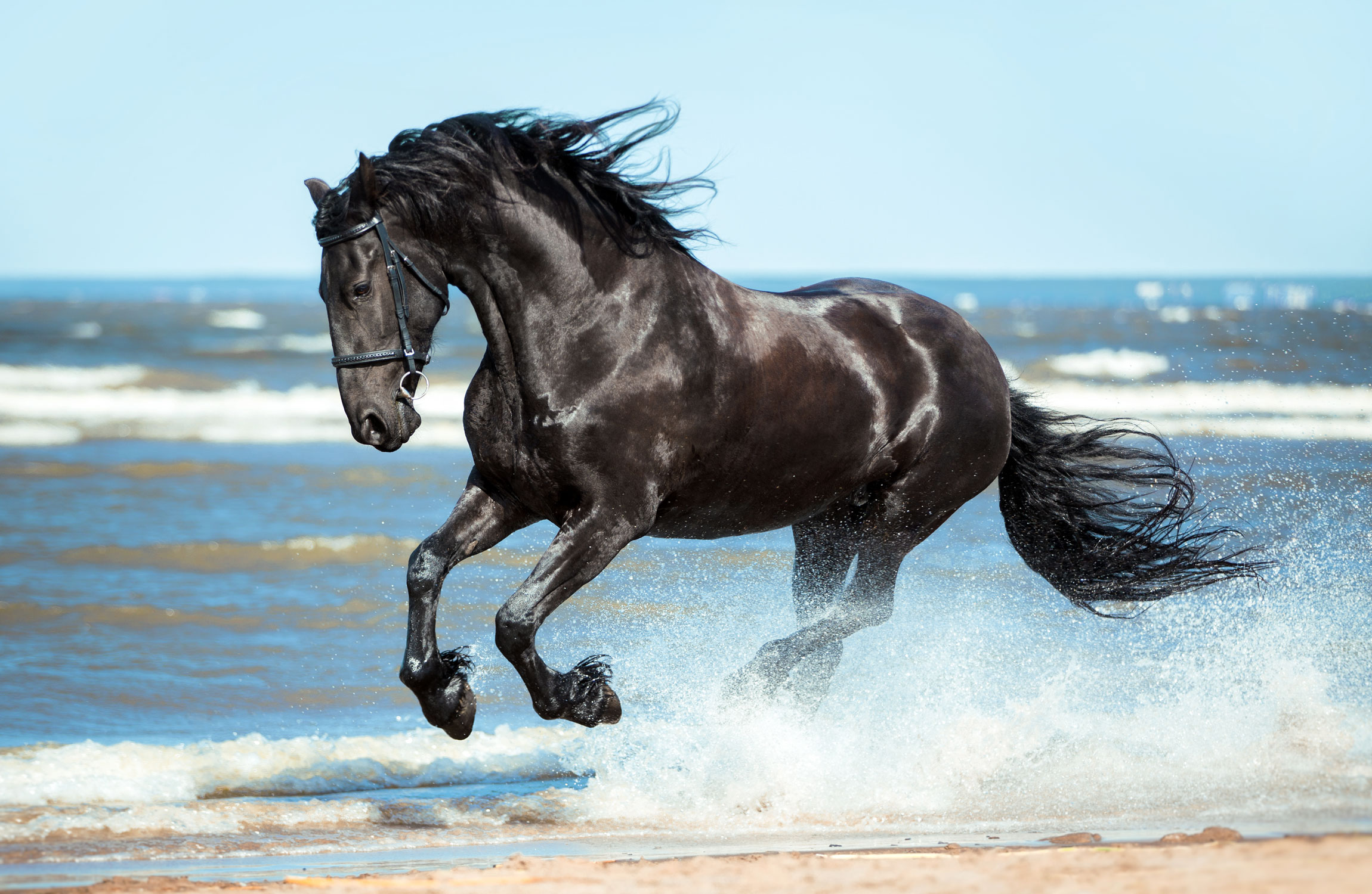 The Fairy Tale Friesian