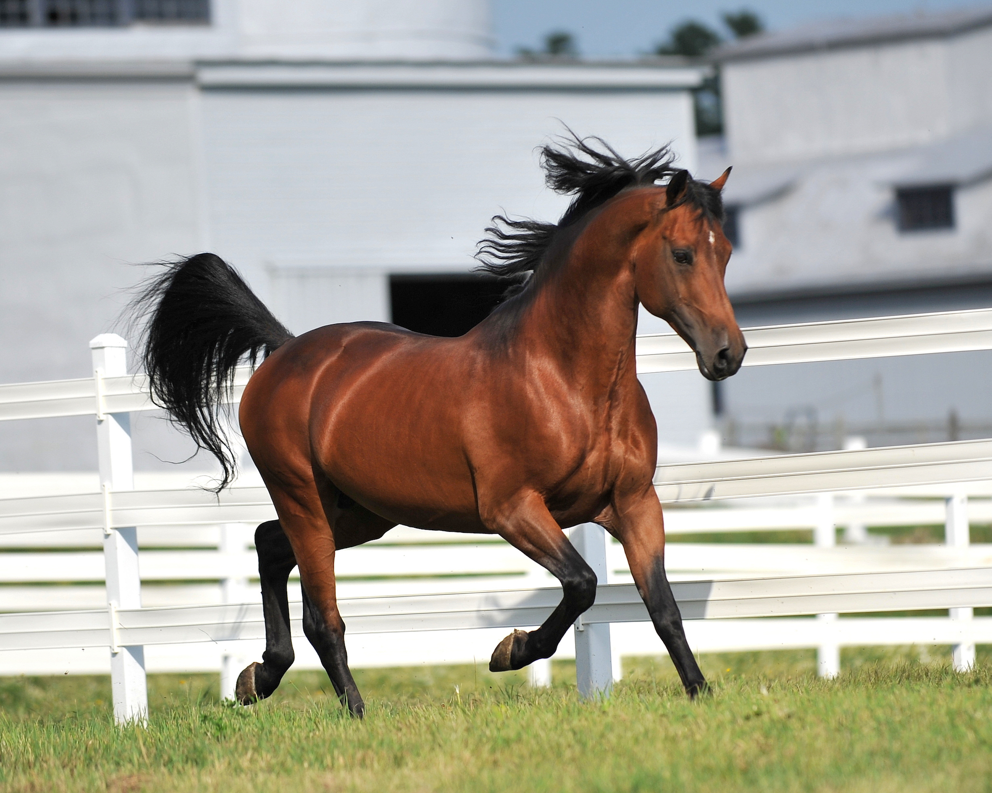 The Best Horse Breeds For Novice Riders