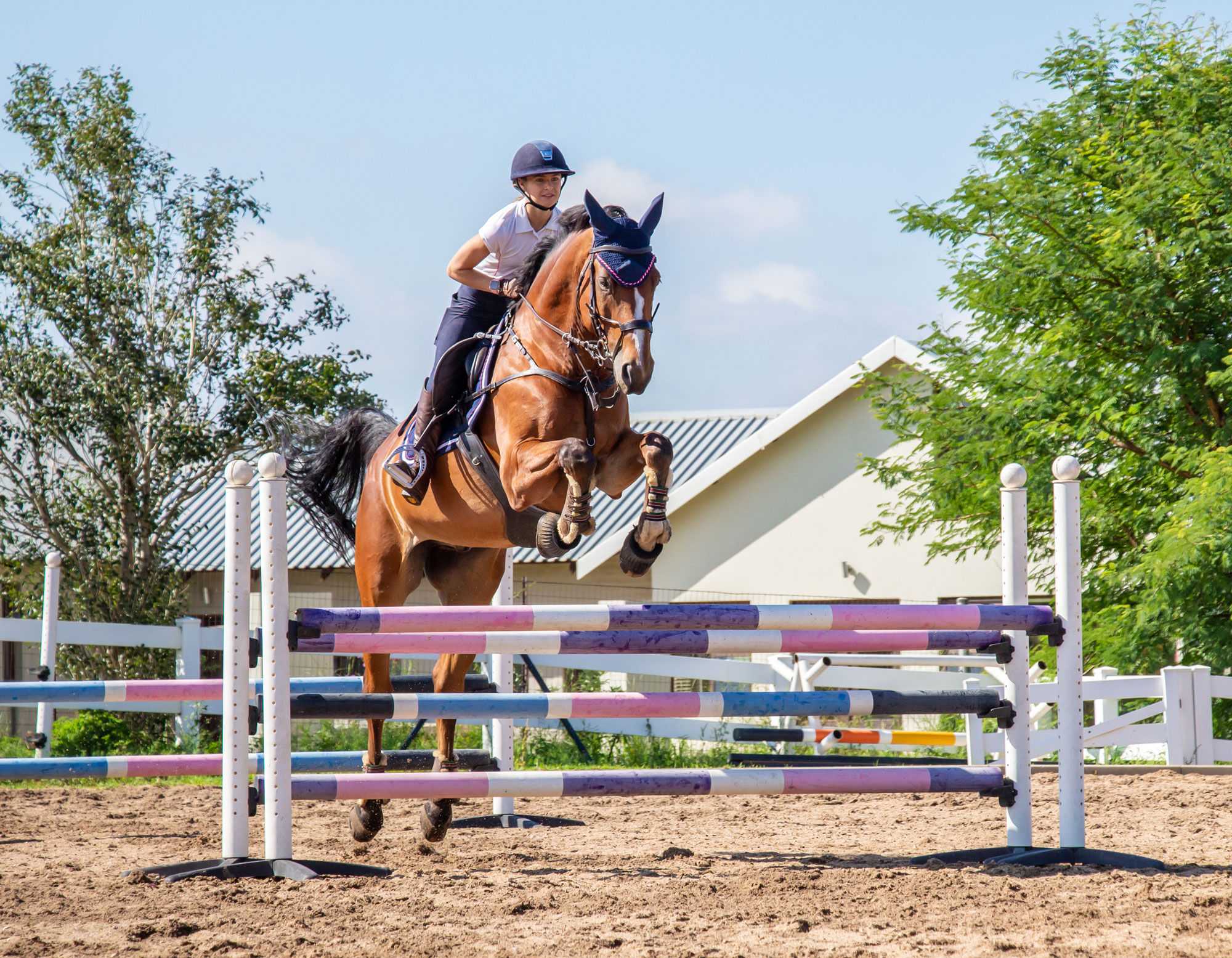 Two Grids To Improve Your Horse S Jumping Technique