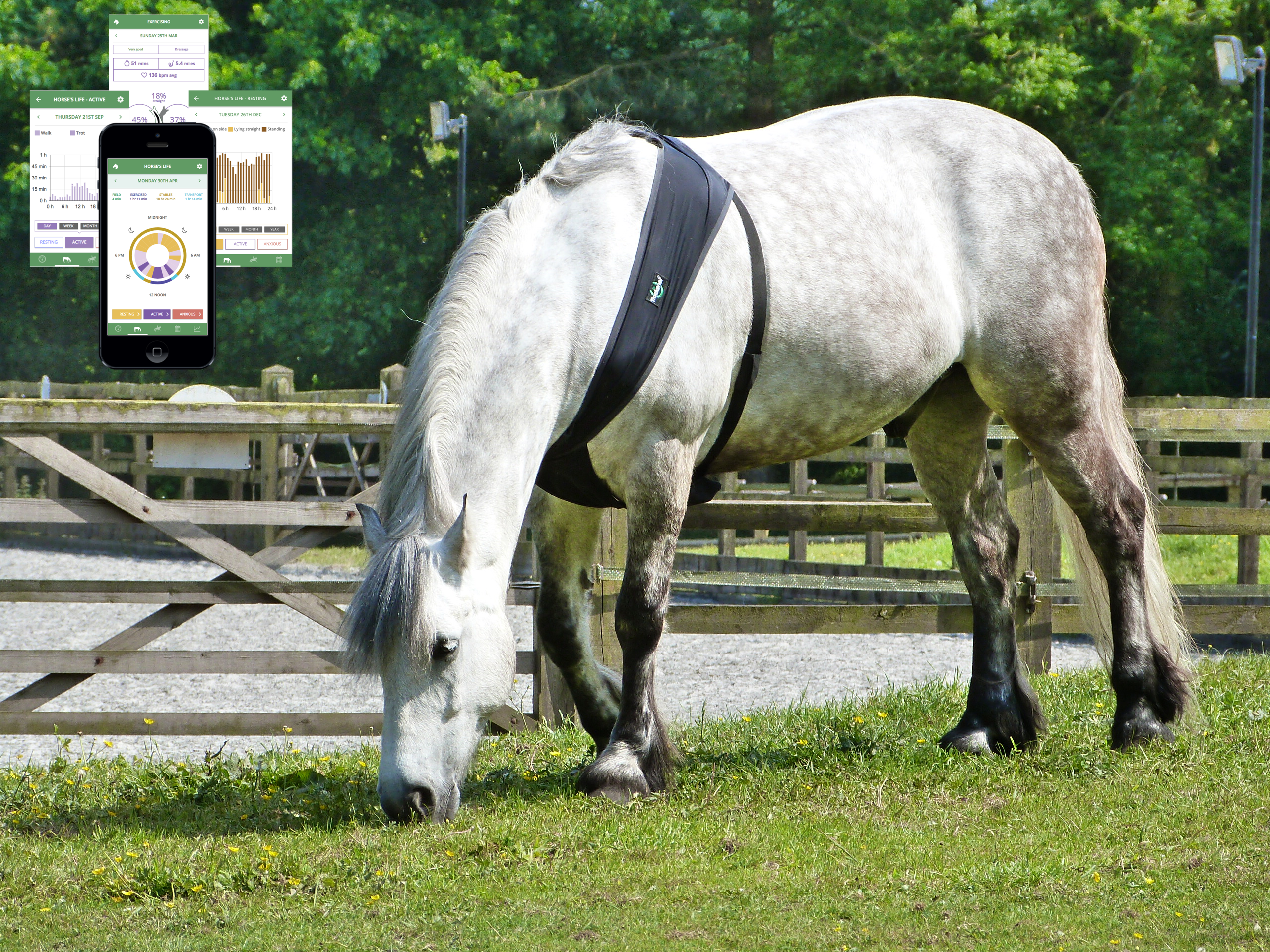 9 Tech Tips to Revolutionise Your Equestrian World
