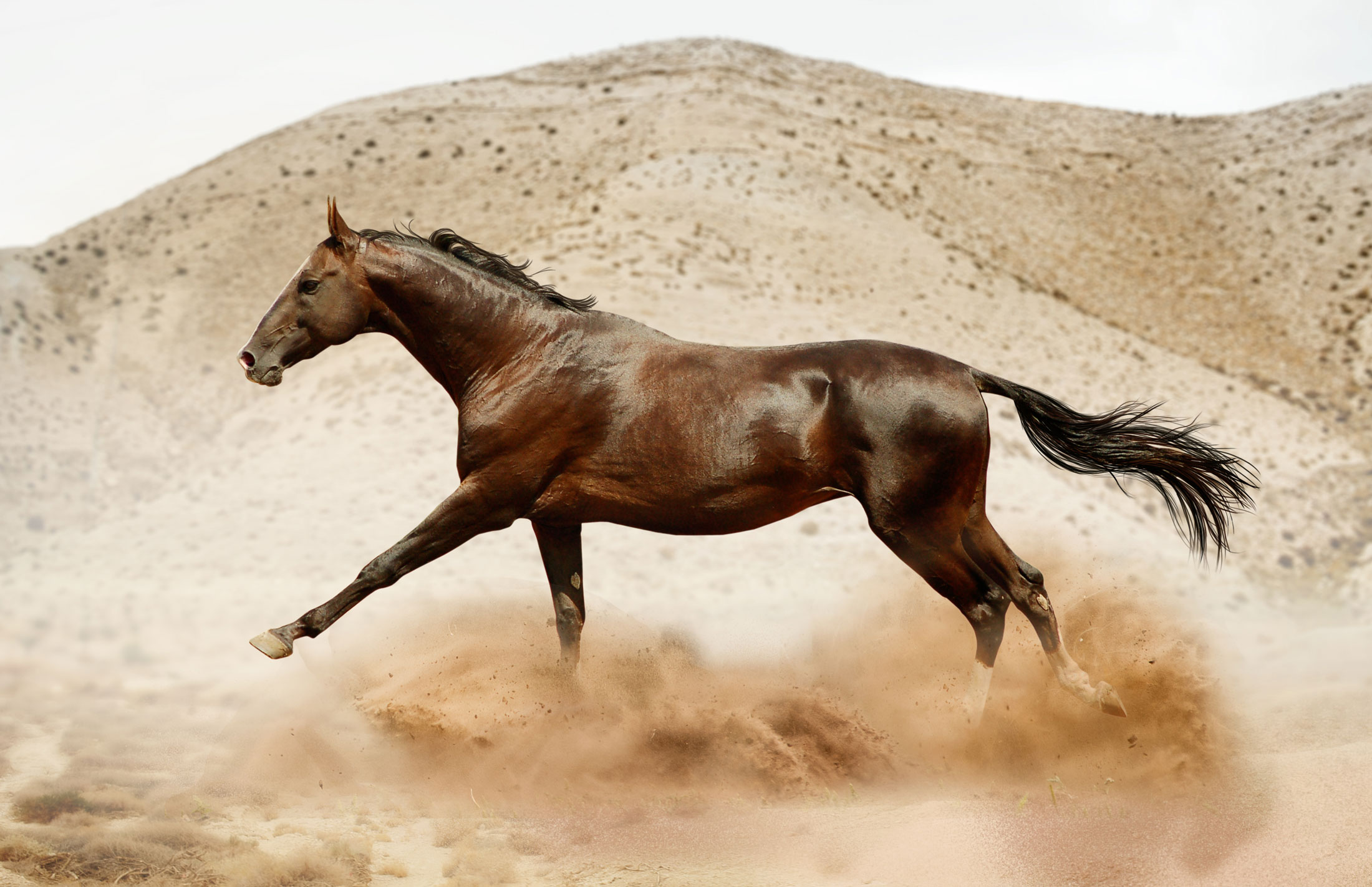 Discover The Exotic Akhal Teke