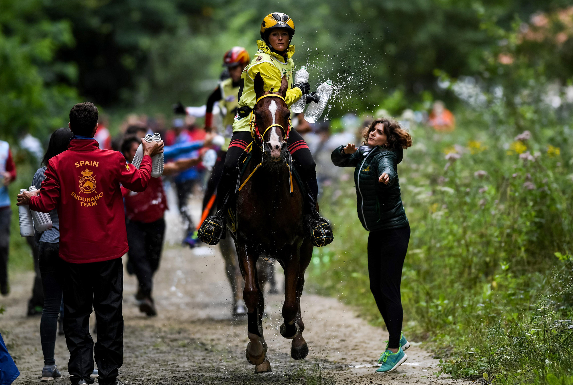 Aubepines Fei 1: Endurance 2017: A Year To Remember