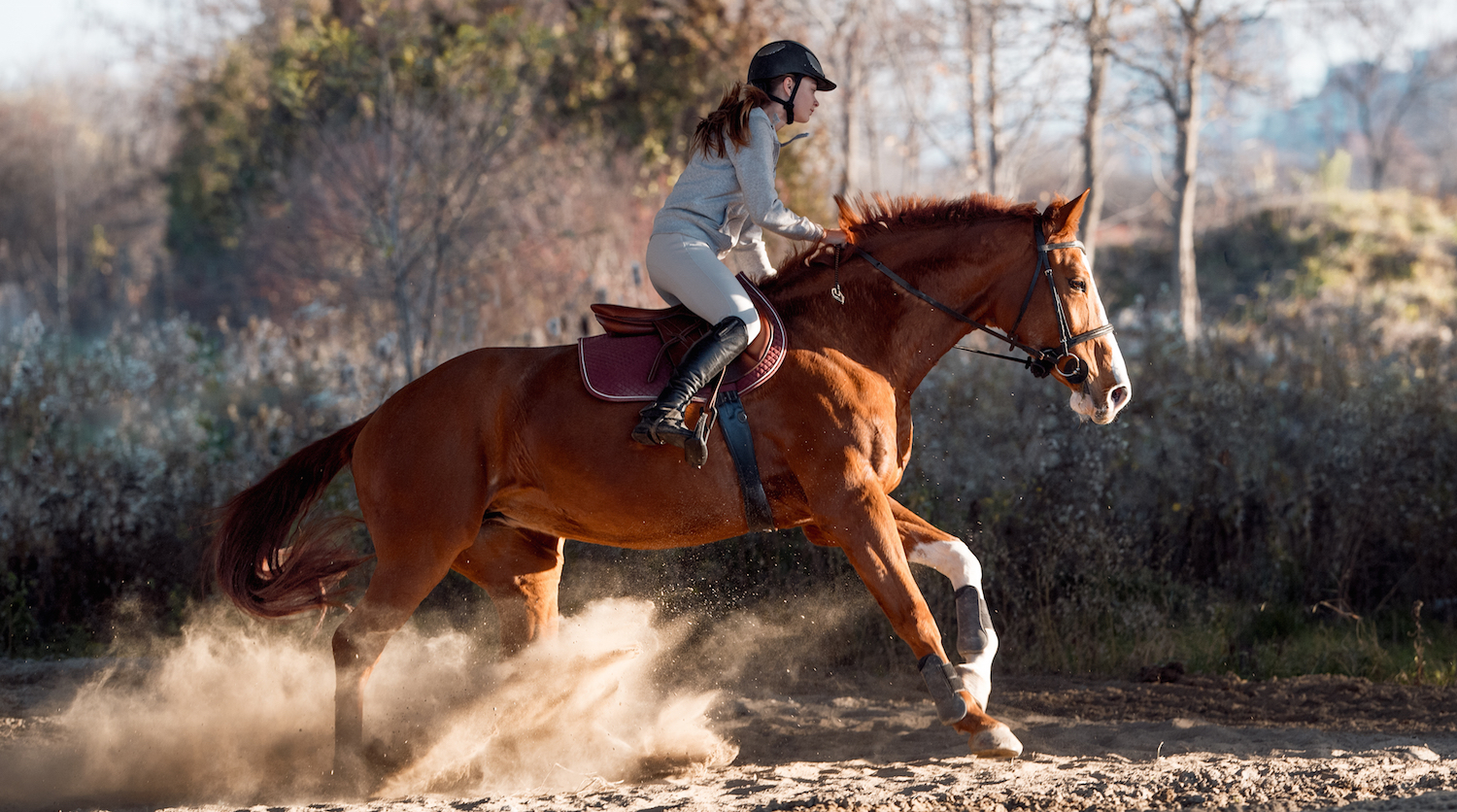 To improve cardiovascular fitness, your best bet is to canter up a hill and  walk back down it. Repeat this a few times but do make sure that your horse  is ...