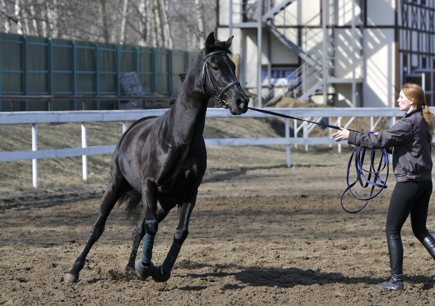 Lunge work can be useful for developing the muscles that go under the  saddle without the weight of a rider, and you can add poles or transitions  to keep the ...