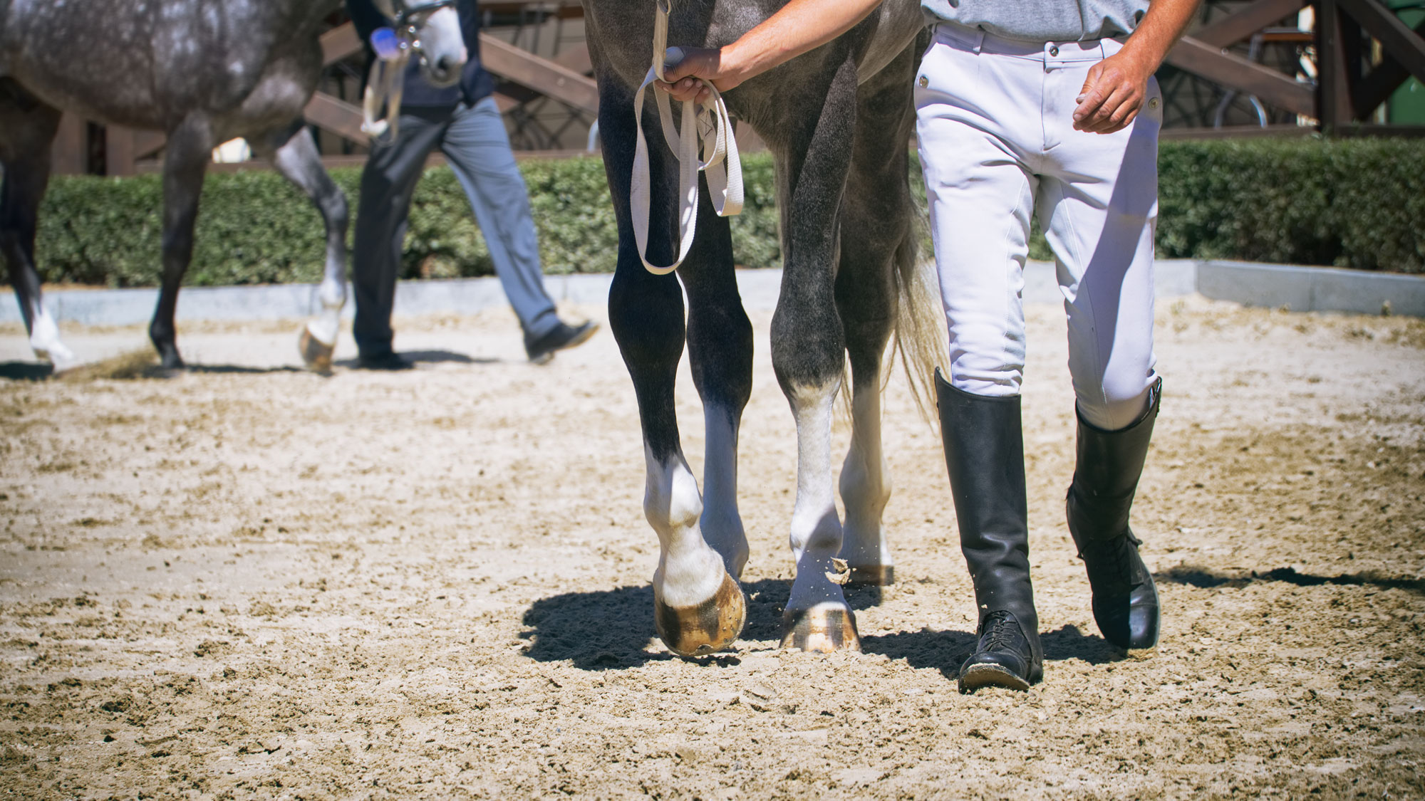 20 Non-Riding Careers for Horse Lovers