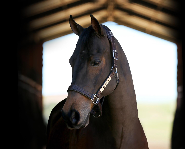 New Equestrian Tech