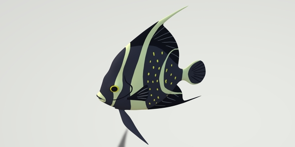 Angelfish 3D Model