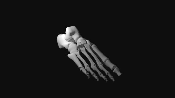 Foot-Bones-CAD.png