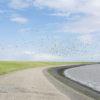 Dwarrelende vogels op Ameland