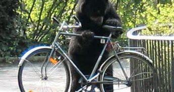 beer-bekijkt-fiets
