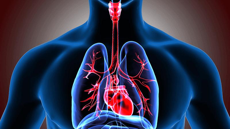 Lien entre hypoglycémie et risque cardiovasculaire : toujours un débat !