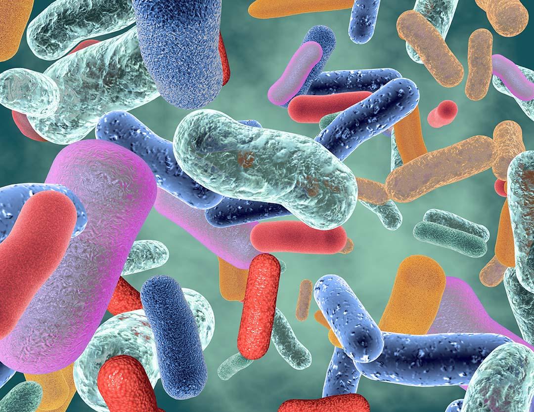 Le microbiote intestinal : beaucoup de travaux, beaucoup de promesses, mais encore beaucoup d'inconnues !