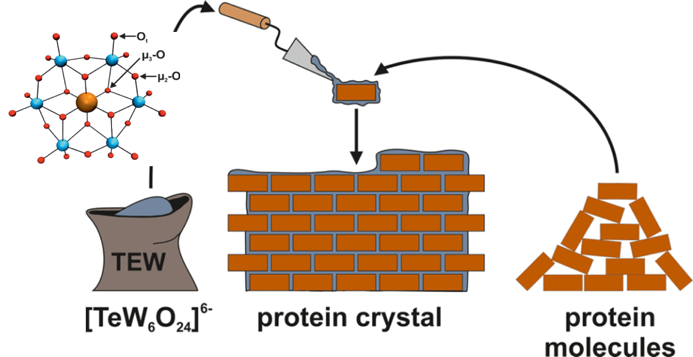 XP Screen: The protein crystal glue