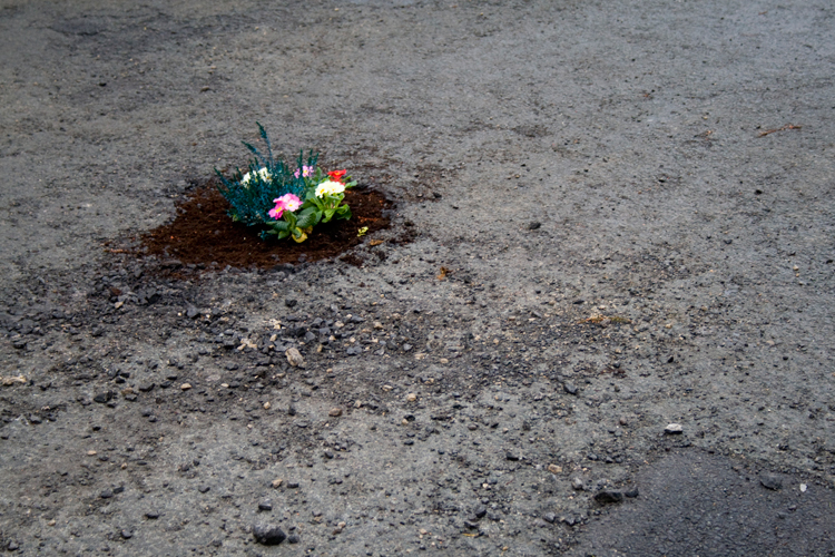 Using flowers to highlight potholes in the road.