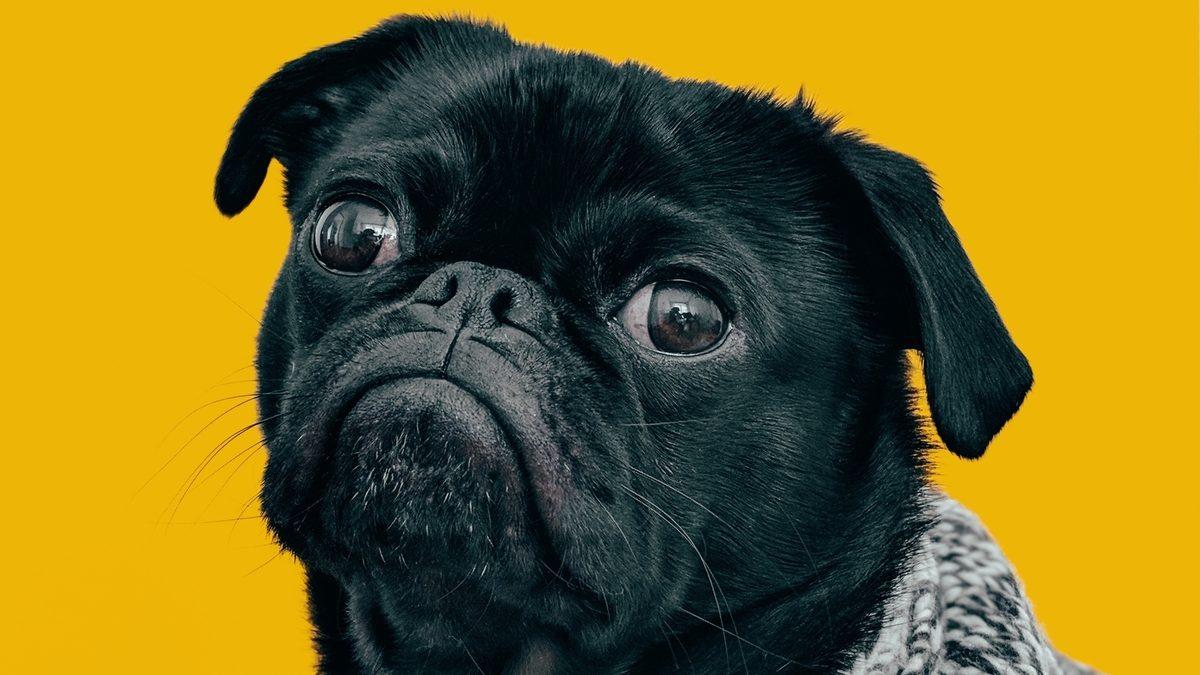 Los beneficios de contratar un seguro para mascotas