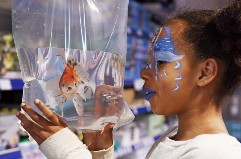 Pw Fishkeeper Scotland Braehead 7