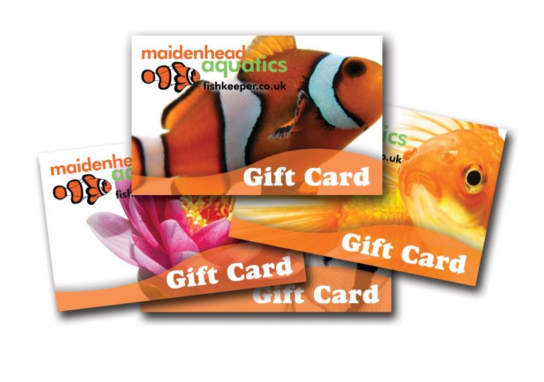 Gift Card Montage