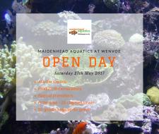 Maidenhead Aquatics at Wenvoe Open Day
