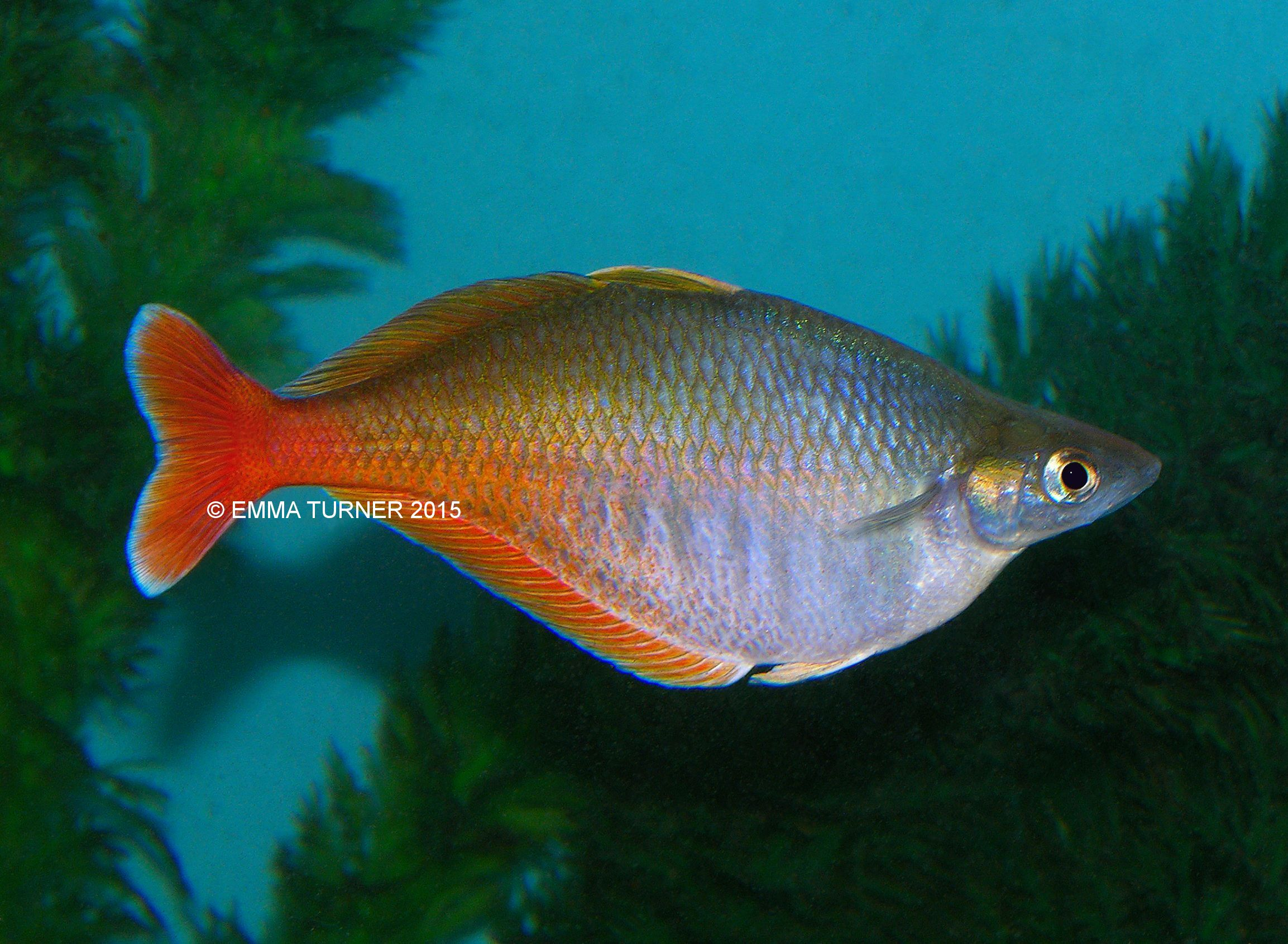 List of synonyms and antonyms of the word rainbow fish for The rainbow fish