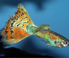 Smarter Fish Live Longer