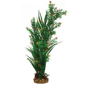 Mizu Cyperus Mix