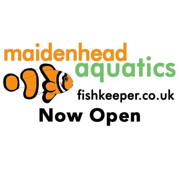 Now Open Logo