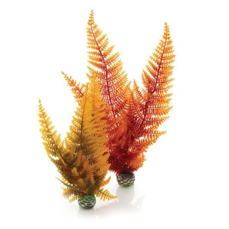 Autumn Fern Plant Pack