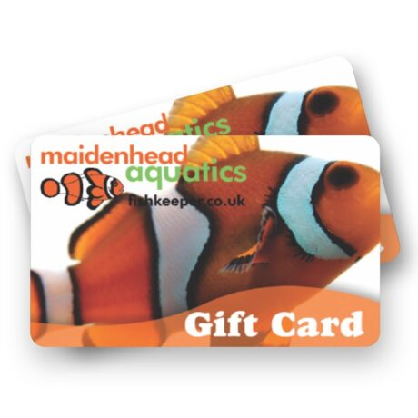 Clownfish Gift Card