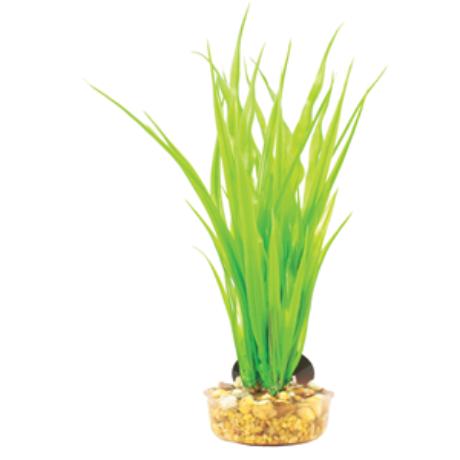 Mizu Cyperus Green