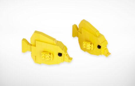 Yellowtang1 1414161967