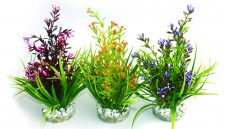 Sydeco Flowering Plant (18cm)