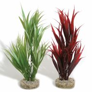 Sydeco Sword Plant (25cm)